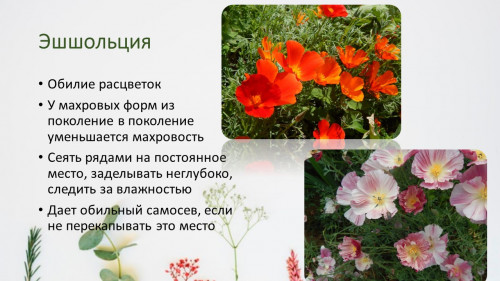 29c57aedc2343eee73.jpg